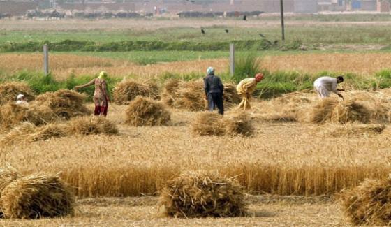 Agriculture Sector – Backbone or a Vestigial bone